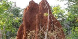 aparición de termitas